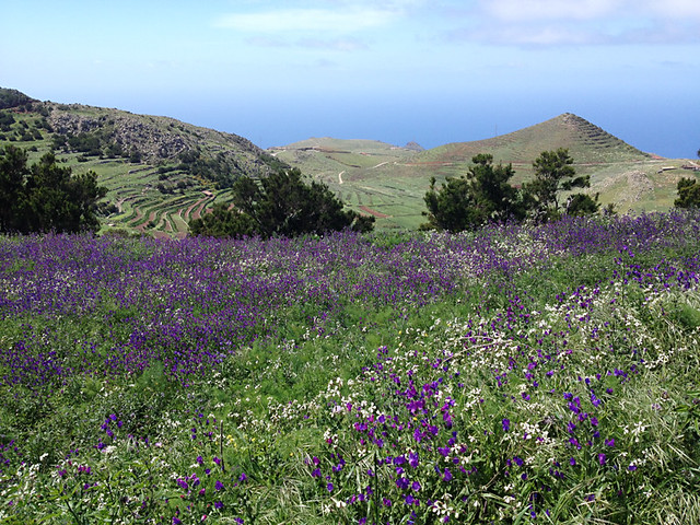 Spring wild flowers on Tenerife