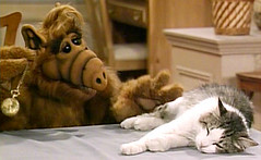 ALF-kitty