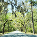 palmetto bluffs road