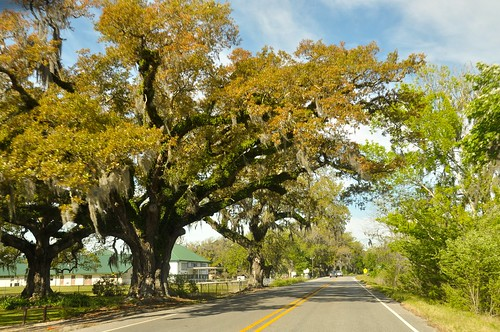 travel usa nature landscape la us spring scenery south scene charm southern 旅游 风景 自然 watertown houma 风光 春天 美国 vcation 南方 路易斯安那州 侯马
