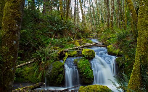 longexposure trees green nature water creek forest canon landscape waterfall moss stream washingtonstate softwater t4i 1riverat matthewreichel