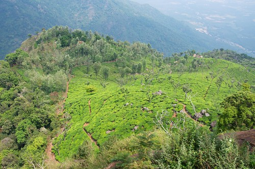 View from Dolphin's Nose, Coonoor