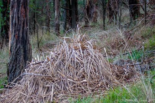 Grass pile