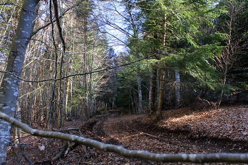 Hêtraie sapinière des Monts Breysse- 43 (23)