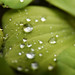 Leaf with water drop by Iyhon Chiu