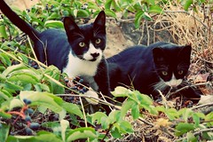 #blackandwhite #kittens #playing in the #twillight #Crete