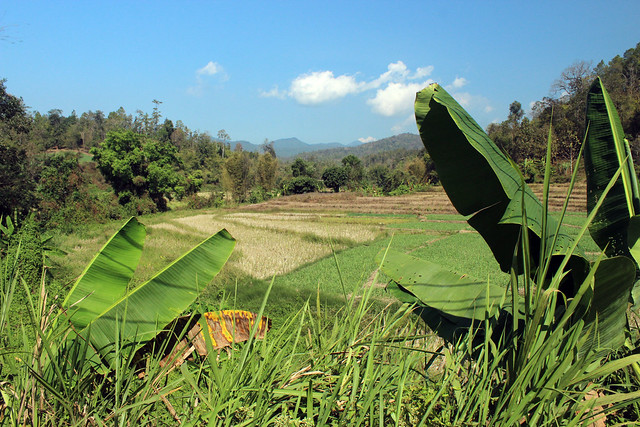 Terrace farming in Thailand