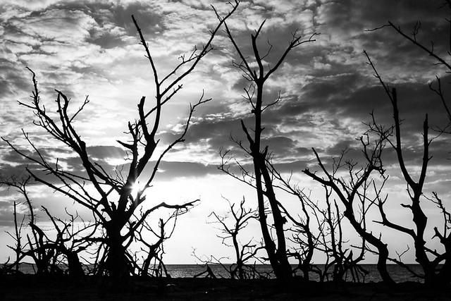 Tree silhouettes at Cayo Levisa, par Franck Vervial