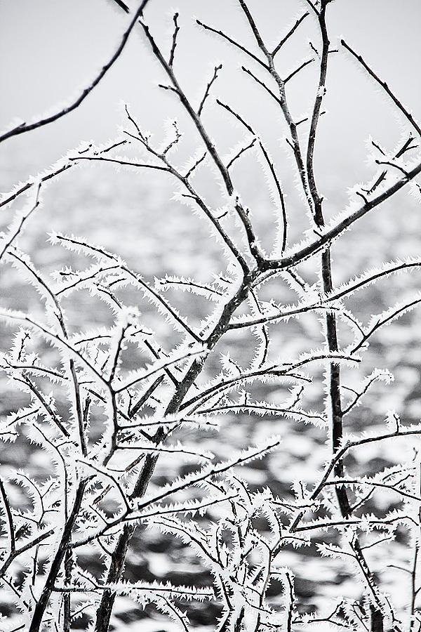 Vinterdag-7
