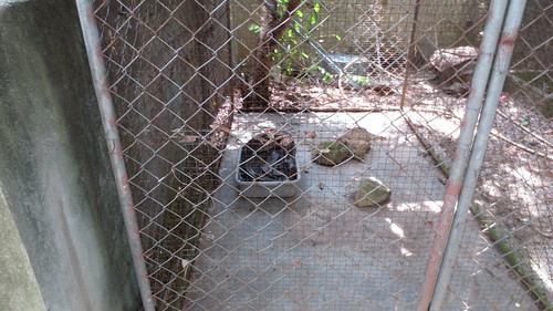 Koh Samui Crocodile Farm サムイ島 クロコダイルファーム (1)