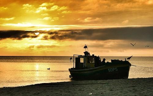 ocean sunset sea sun seagulls lake beach water sunrise river landscape view seagull boatboatsshipviewlandscape