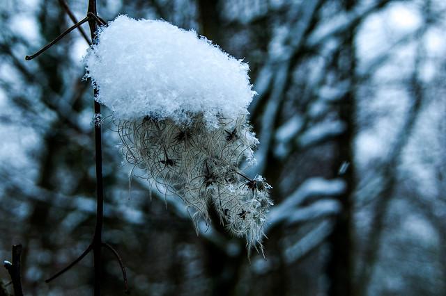 Promenade dans la neige - Neige et plante