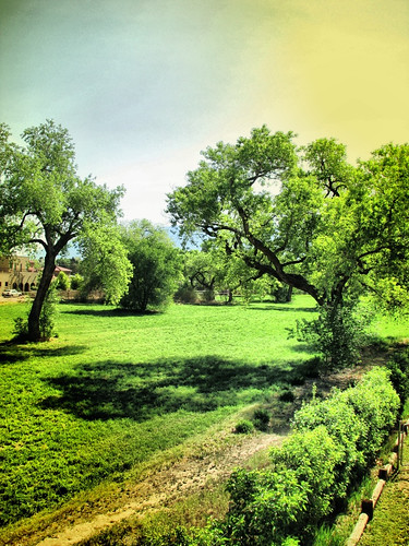 Los Ranchos alfalfa field by rraabfaber