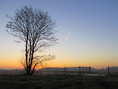 morning bridge light tree sunrise nevel boom brug ochtend zonsopgang schoonhoven natuurgebied langdorp mygearandme mygearandmepremium fotodominic vigilantphotographersunite vpu2 vpu3 vpu4 vpu5 vpu6 vpu7 vpu8 vpu9 vpu10