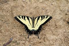 Butterflys, Dragonflies, Damselflies