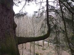 Unusual tree revisited
