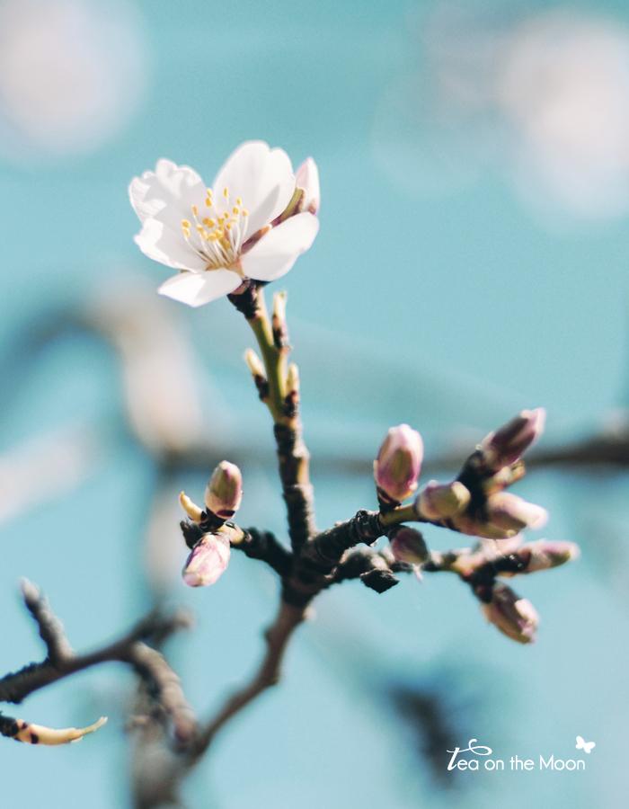 Primavera flor almendro
