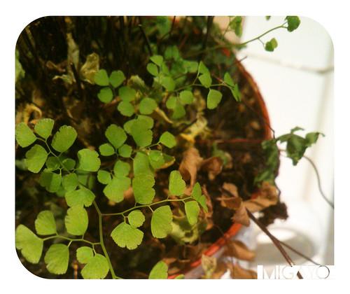 hojas4