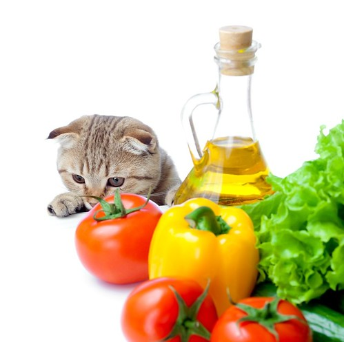 Mishu the Vegan Cat