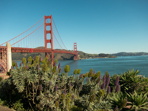 Golden Gate Bridge and Purple Plants