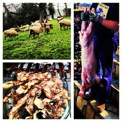 """Tell me, Clarice– have the lambs stopped screaming?""  #lambs #corderos #asturias #brasa #barbacoa #bbq #circleoflife"