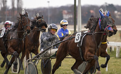 eventing(0.0), endurance riding(0.0), jockey(0.0), animal sports(1.0), racing(1.0), equestrian sport(1.0), sports(1.0), race(1.0), horse harness(1.0), harness racing(1.0),
