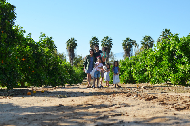 egg hunting in an orange grove