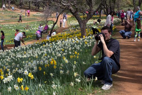 Daffodil Hill-11
