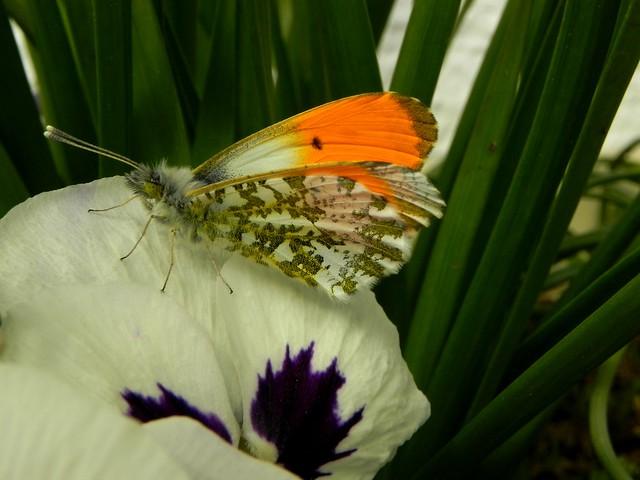 Aurore mâle le 12.04.13 à 12h05 (2)