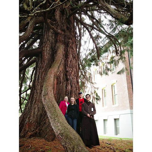 Under the redwood tree at the monastery