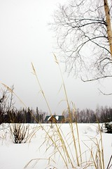 March 23, 2013: Winter Grass