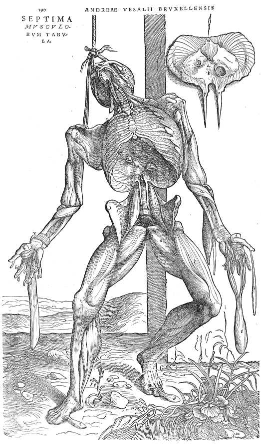 Question about Andreas Vesalius' discovery of dissecting bodies?