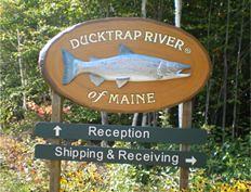 Ducktrap 1