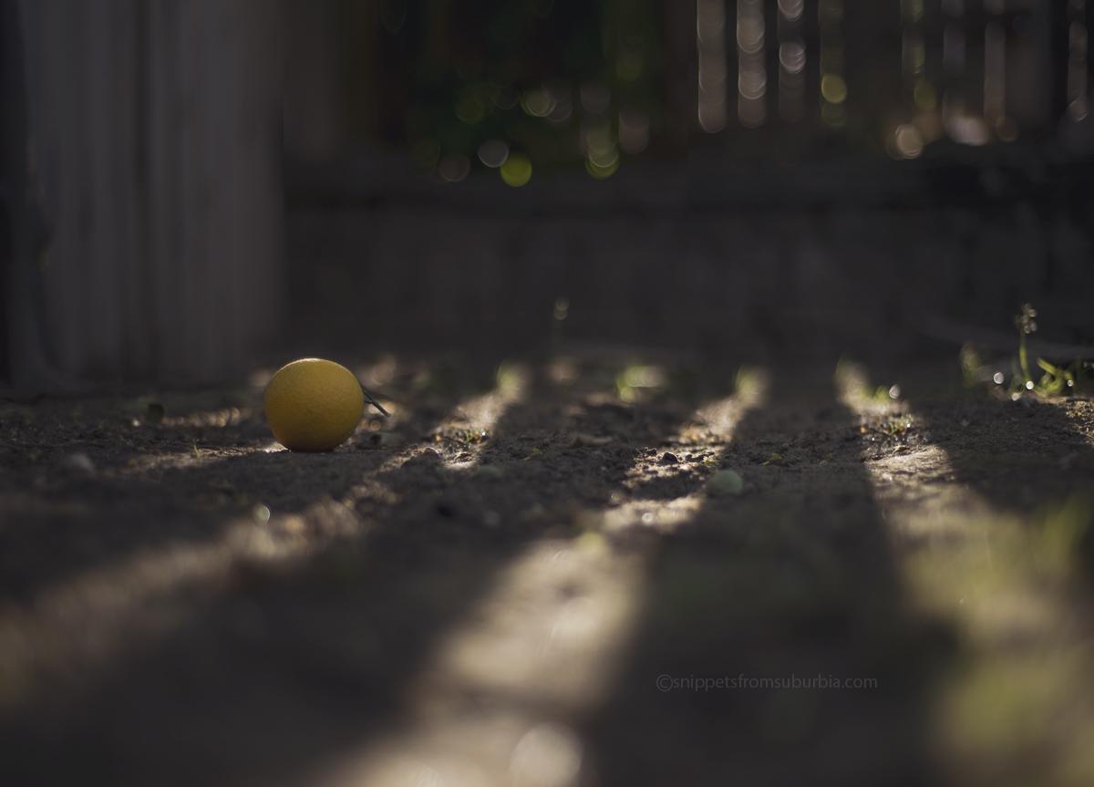 Lemon in the Morning Light