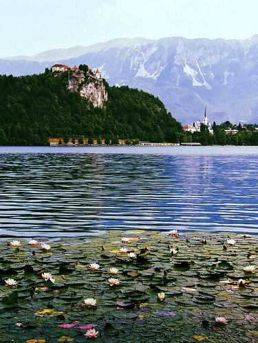 flowers lake mountains alps castle church water landscape julian slovenia lilies bled uploaded:by=flickrmobile flickriosapp:filter=toucan
