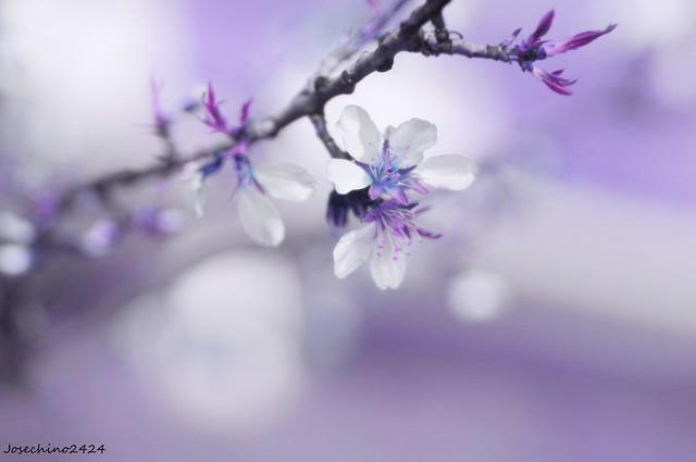 Acercandose la primavera