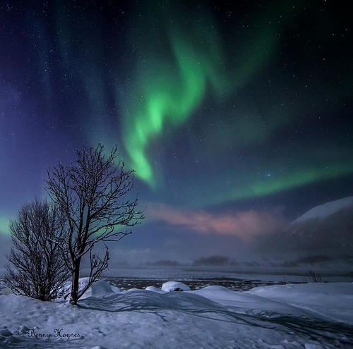 Buksnesfjord, Andøya island, Norway, aurora and frosty smoke, shadow from tree