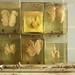 Kidneys anyone? by Romany WG