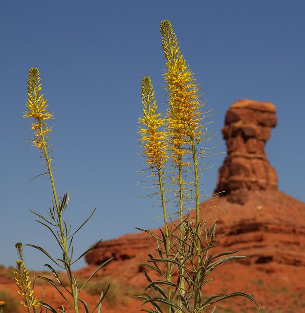 Desert flora definition meaning for Flore definition