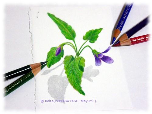 2013_02_20_violet_01_s
