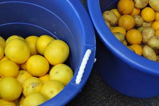 grapefruits, lemons, potatoes