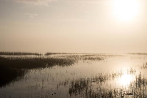 sunlight grass unitedstates southcarolina charleston marsh marshgrass danielisland wandoriver