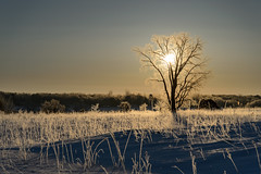 Fiery Tree and Prairie_42704.jpg by Mully410 * Images