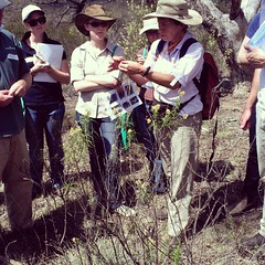 Isobel Crawford helping a group identify a grass. #ANPCworkshop #plantIDcanberra