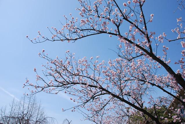 plum_garden_3