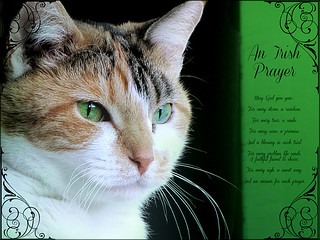 "My ""Angel"" Stevie sends St. Patrick's Day Blessings ~~"