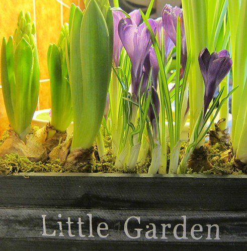 Little Garden by Anna Amnell