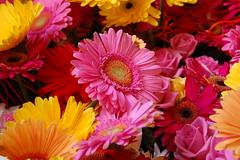 2013 Melbourne International Flower and Garden Show
