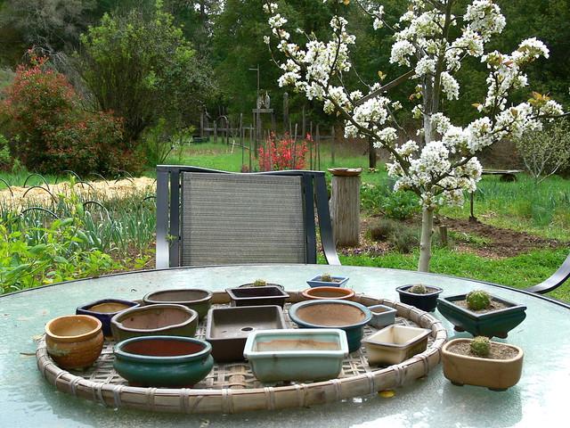 vasi, sottovasi, bonsai, hobby