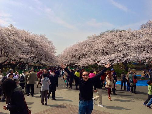 Greg at Tokyo's Ueno Park Cherry Blossoms